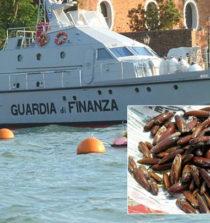 Salerno pesca 7 KG di datteri denunciato dalla Guardia di Finanza per deturpamento naturale